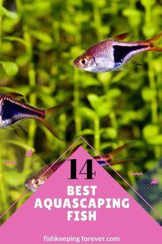 14 Best Aquascaping Fish - Perfect schooling fish. 2 Aquarium Setup, Aquarium Design, Aquarium Decorations, Biotope Aquarium, Tropical Fish Aquarium, Pet Fish, Aquascaping, Freshwater Aquarium, Fresh Water