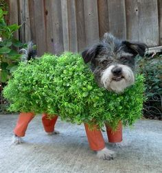 Top 10 DIY Dog Costumes