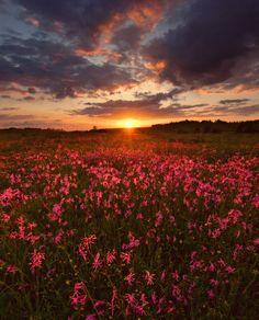 35PHOTO - Vladimir - Purple sunset