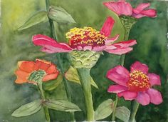 "Zinnias blooming on my watercolor paper ""Tiny Dancer"""