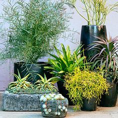 Succulents with height Large succulent containers on Pinterest