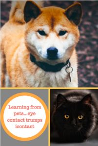 Learning from pets...when eye contact trumps icontact.