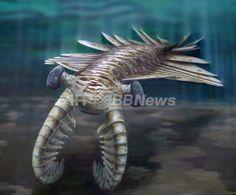 5億年前の海を泳いでいた捕食動物「アノマロカリス(Anomalocaris)」。体長は最大1メートルで、カンブリア紀の食物連鎖の頂点に立っていたとされる(2011年11月27日作成、同年12月7日提供)。(c)AFP/University of Adelaide/Katrina KENNY ▼16Jul2014AFP|【特集】古代生物図鑑 http://www.afpbb.com/articles/-/3002031