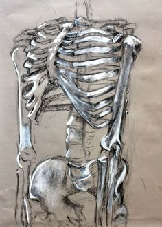 Clara Lieu, Skeleton Drawing Assignment, conte crayon on toned paper, RISD Project Open Door, 2015.