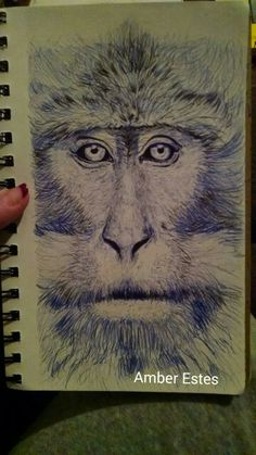 Monkey drawing in bic pen
