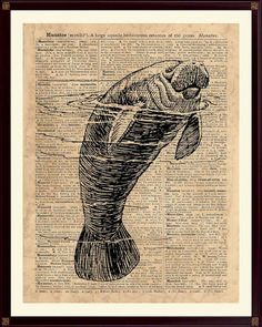 Manatee Print Nautical Decor Manatee Poster Nautical by DicosLand