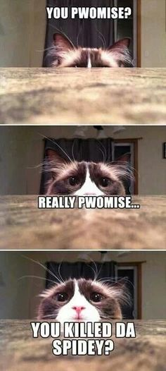 I personally love memes and funny cat memes are my personal favorite. Who could resist adorable images of cats, dogs, and other animals next to a funny tagline? Cat Memes To Make You Laugh Until You Cry! Funny Animal Jokes, Funny Cat Memes, Cute Funny Animals, Cute Baby Animals, Funny Dogs, Cute Cats, Funny Quotes, Cats Humor, Funny Humor