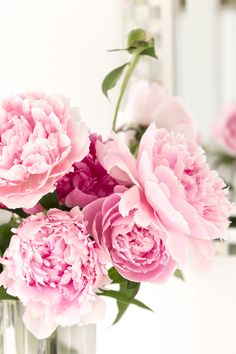 Molly Mell: Peonies, and a Pudding to die for Peonies Wallpaper, Rose Wallpaper, Pink Peonies, Pink Roses, Pink Flowers, Fresh Flowers, Pretty In Pink, Beautiful Flowers, Exotic Plants