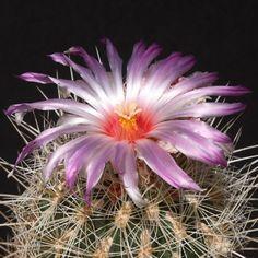 Cactus world beauty: September 2011