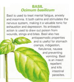 Basil - infographic only - No link to anything else.