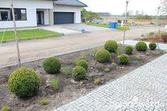 Zamieszkać w ogrodzie - strona 39 - Forum ogrodnicze - Ogrodowisko