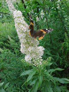 """Looking for native plants for your garden? Look no further than our """"Natural Natives"""" list!"""