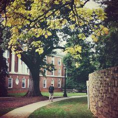 #UVa Brown College #fall
