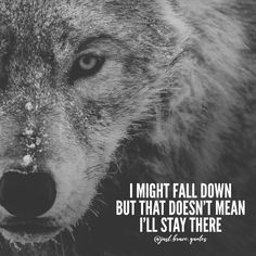 When you fall down, the only thing you gotta do is to come back stronger Keep pushing! #justbravequotes #wolf #comeback #nevergiveup #strong #quote #quotes #motivation #inspiration #hustle #grind