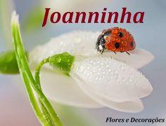 Venha conhecer minha loja online! joanninhafloresedecoracoe.lojavirtualnuvem.com.br