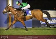 Horse racing syndication & racehorse shares for sale, Sydney, Australia. Topline Thoroughbreds syndicates has engaged the services of Group 1 winning trainer Grahame Begg.