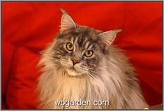 #wbgarden Ostrava cats ... http://wbgarden.com
