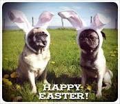 Happy Easter weekend everyone! Hahhaah puggssss