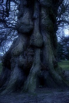 Ssshhh Sleeping Tree by mliebenberg, via Flickr Enchanted Tree, Tree People, Tree Faces, Tree Carving, Nature Spirits, Unique Trees, Old Trees, Tree Trunks, Nature Tree