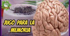 No te gustaría tener la oportunidad de potenciar tu cerebro y su memoria, pues esto es posible, solo tienes que consumir esta bebida natural
