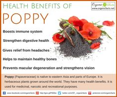 Use this Health benefits of poppy include its ability to boost immune system, protect heart health, and improved vision. Read more on