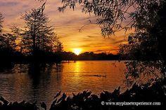 University lake, Baton Rouge, Louisiana