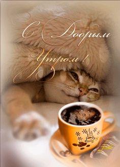 Картинки анимационные кофе с добрым утром Чашечка кофе — поднять настроение. Пол-шоколадки — заесть невезение. Этот проверенный вкус горько-сладкий Словно шепчет: «Всё будет в порядке» ДОБРОЕ УТРО!!! Я принесу тебе кофе в постель, Чтоб утром день бодро начался. Я принесу тебе розу в постель, Чтобы ты начала улыбаться. …
