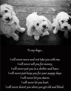 to my dogs.....