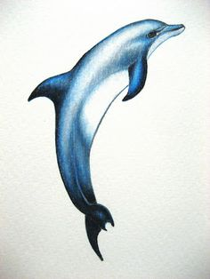 A Drawing a Day for a Year: October 2011 - Dolphin Dolphin Drawing, Ocean Drawing, Dolphin Painting, Dolphin Art, Art Drawings Sketches, Animal Drawings, Dolphin Images, Dolphins Tattoo, Delphine