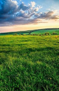 Grasslands that go on and on