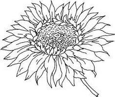 Click To See Printable Version Of Head Sunflower Coloring Page