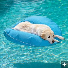 I found why Annabell won't get in the pool! She is holding out until I buy her one of these.