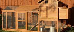 Building Your Own Chicken Coop