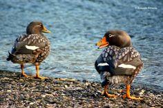 aves de Tierra del Fuego