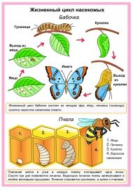 Жизненный цикл насекомых (бабочки и пчелы) Global Citizenship, Life Science, Kids Education, Primary School, Ecology, Kids And Parenting, Habitats, Montessori, Homeschool