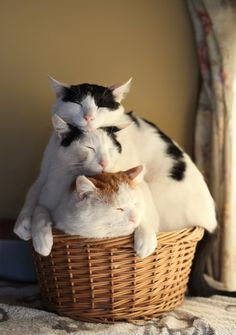 Stack-able cats in a handy basket.