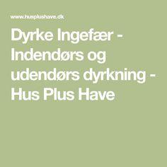 Dyrke Ingefær - Indendørs og udendørs dyrkning - Hus Plus Have Planters, Tips, Homesteading, Hobbies, Gardening, Drink, Outdoor, Gardens, Sodas