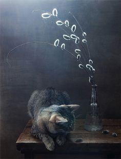 Still life cat
