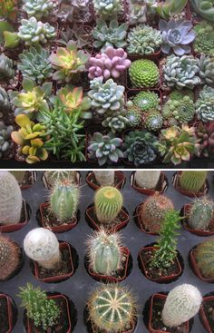 Sure, I'm partial to succulents, but these would make for pretty adorable favors.