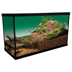 ... Turtle tank ideas on Pinterest Small turtles, Aquatic turtles and