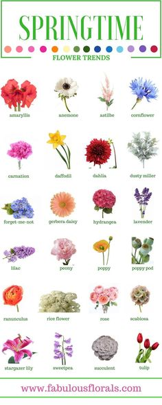 SPRING FLOWERS – Names of the best Spring wedding trends! Your source for wholesale DIY wedding flowers!