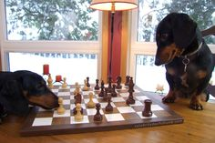 Here's Oakley attempting to make a comeback by moving his pawn during an intense game of chess.