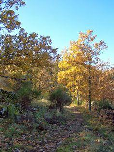 Oeste Natura. Interpretación & paisajes culturales: CAMINAR PARA DESCUBRIR Y CONOCER