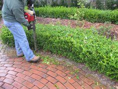April Garden Chores: Kevin Lee Jacobs
