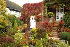 All sizes | Garden colours at the start of October | Flickr - Photo Sharing!