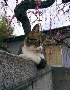 gatos sonita