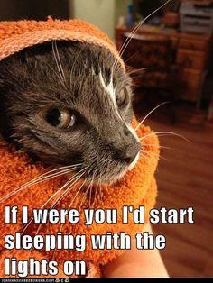 meow  wow!