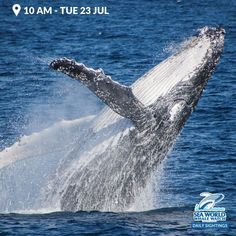 Sighting #from #today #s #10 #AM #Whale #Watching #Tour #- #It`s #days #like #today #that #we #live #for. #our #main #account #seaworldcruises #seaworldcruises #goldcoast #goldcoastwhalewatching #whales #humpbackwhales #ocean #animals #marinelife #gcbeach #wearegoldcoast #nails Whale Watching Tours, Sea World, Whales, Marine Life, Gold Coast, Naturally Curly, Curly Bob, Funny Animals, Maine