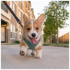 A happy morning walk!!
