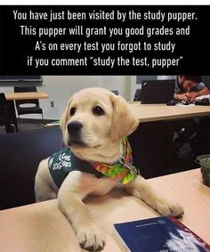 Study the test pupper